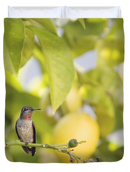 Duvet Cover featuring the photograph Hummingbird In Lemon Tree by Cindy Garber Iverson
