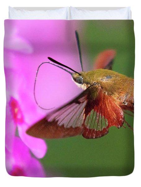 Hummingbird Moth Feeding 2 Duvet Cover