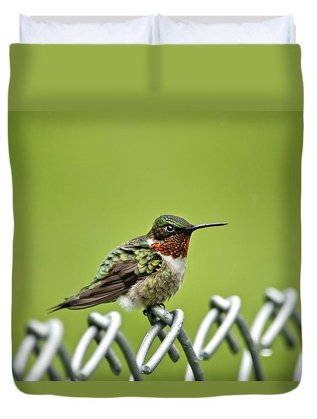 Hummingbird On A Fence Duvet Cover by Christina Rollo