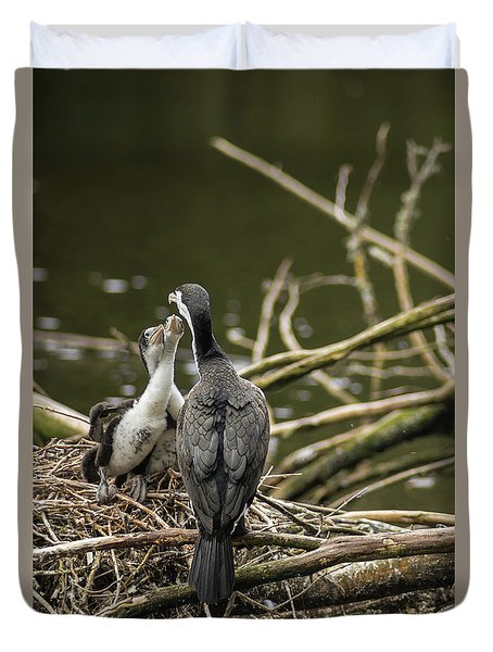 Hungry Pied Shag Chicks Duvet Cover by Racheal Christian