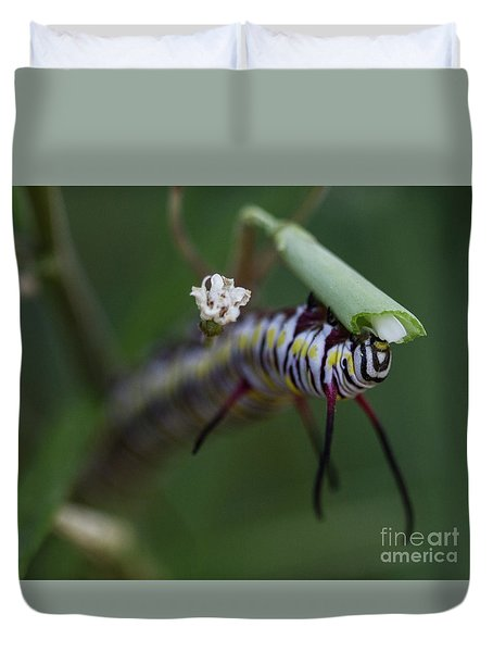 Hungry Queen Caterpillar  Duvet Cover by Ruth Jolly