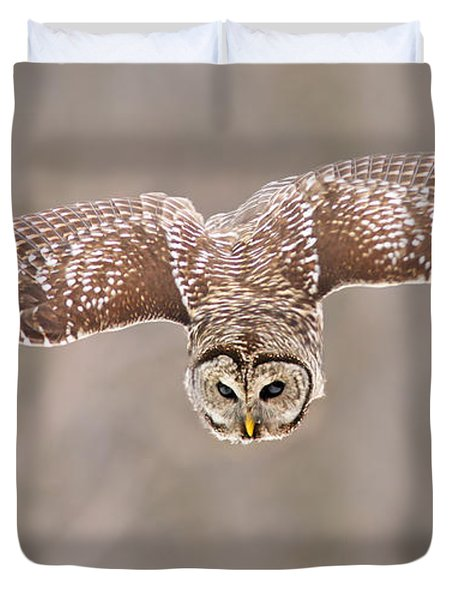 Hunting Barred Owl  Duvet Cover