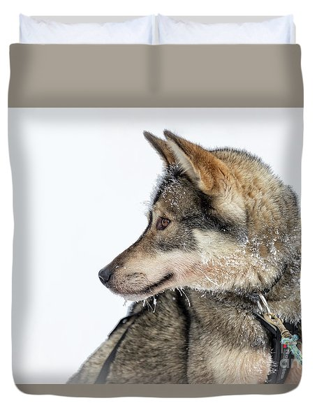 Husky Dog Duvet Cover by Delphimages Photo Creations