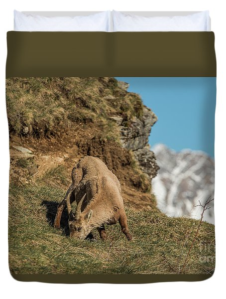 Ibex On The Mountains Duvet Cover