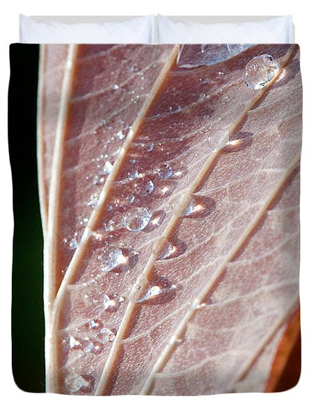 Icy Fall Morning Duvet Cover by Lisa Knechtel