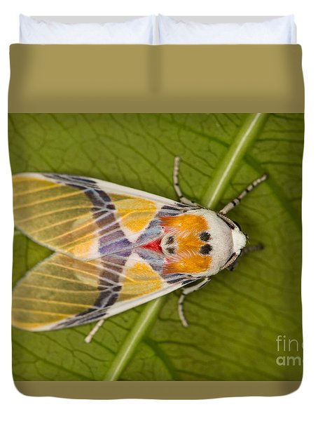 Duvet Cover featuring the photograph Idalus Carinosa Moth by Gabor Pozsgai