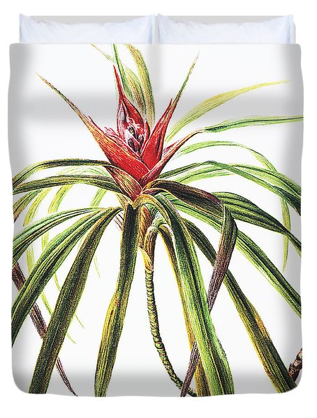Ieie Plant Duvet Cover by Hawaiian Legacy Archive - Printscapes
