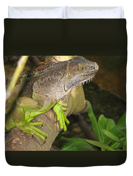 Iguana - A Special Garden Guest Duvet Cover by Christiane Schulze Art And Photography