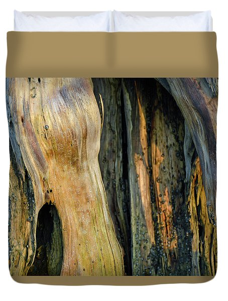 Illuminated Stump 03 Duvet Cover by Bruce Gourley