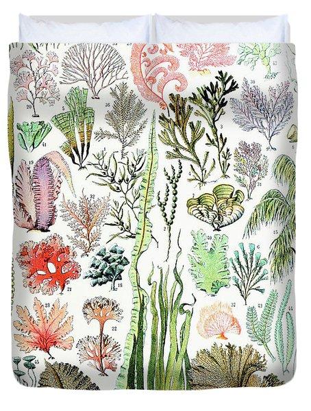 Illustration Of Algae And Seaweed  Duvet Cover