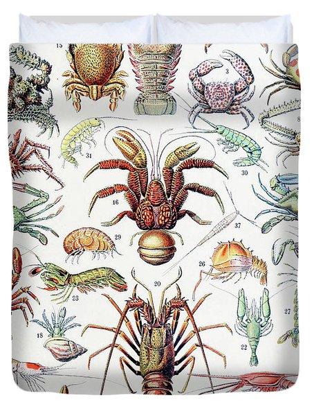 Illustration Of Crustaceans, 1923 Duvet Cover