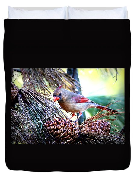 Img_0311 - Northern Cardinal Duvet Cover