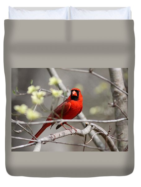 Img_2027-004 - Northern Cardinal Duvet Cover