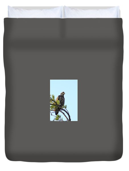 Immature Bald Eagle 1 Duvet Cover