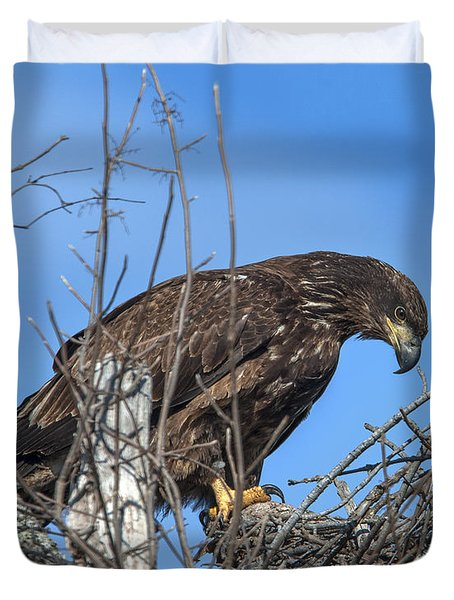 Immature Bald Eagle Drb0205 Duvet Cover