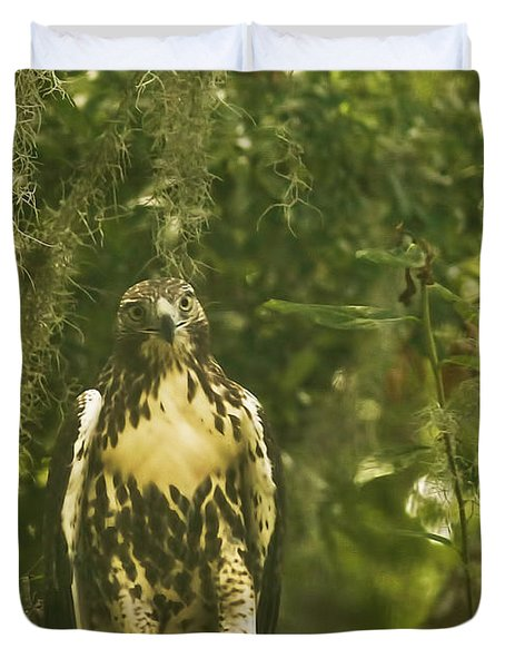 Immature Red-tail Hawk Duvet Cover by Phill Doherty