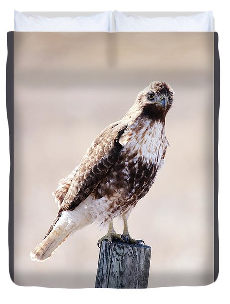 Immature Red Tailed Hawk Duvet Cover