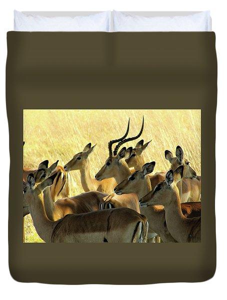 Impalas In The Plains Duvet Cover