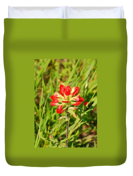 Indian Paintbrush Close Up Duvet Cover
