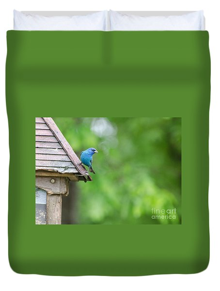 Duvet Cover featuring the photograph Indigo Bunting 2  by Donna Brown