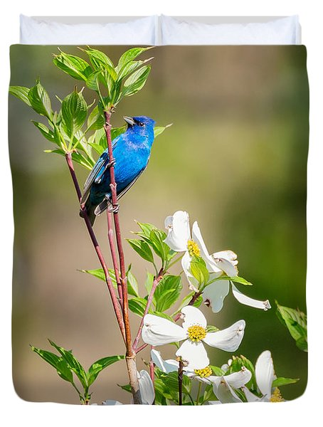 Indigo Bunting In Flowering Dogwood Duvet Cover by Bill Wakeley