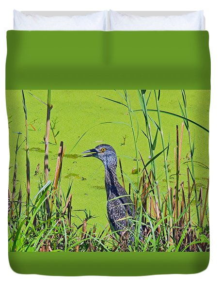 Inmature Black Crowned Heron. Duvet Cover