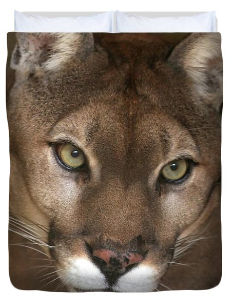 Intense Cougar Duvet Cover by Sabrina L Ryan