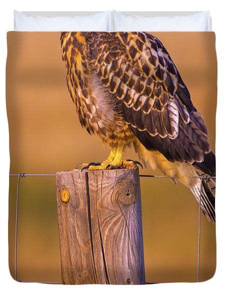 Intermediate Morph Swainson's Hawk Duvet Cover