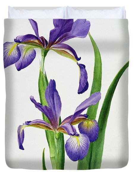 Iris Monspur Duvet Cover by Anonymous
