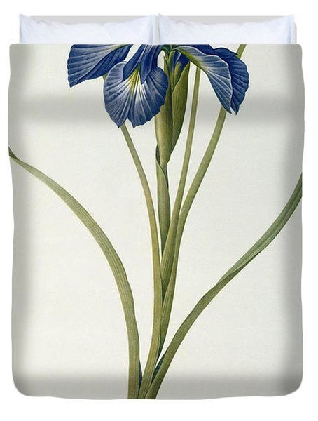 Iris Xyphioides Duvet Cover by Pierre Joseph Redoute