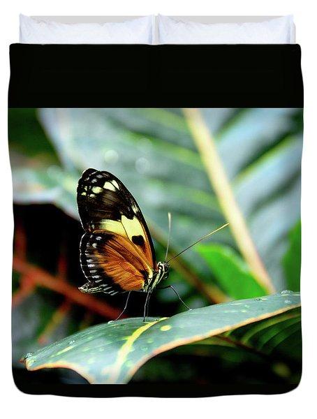 Ismenius Tiger Butterfly-2 Duvet Cover