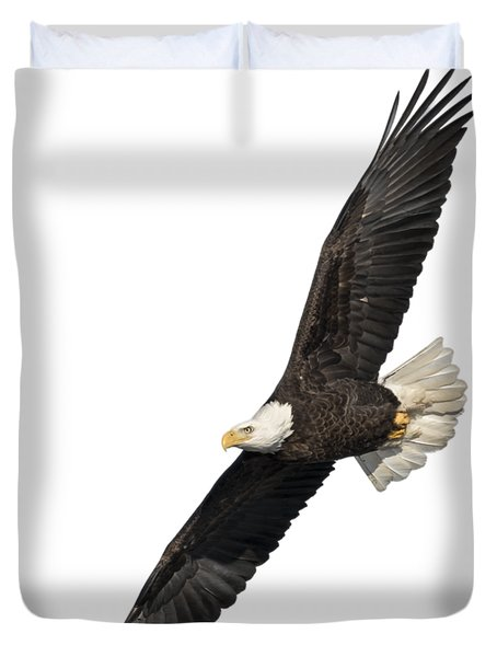 Isolated American Bald Eagle 2016-3 Duvet Cover