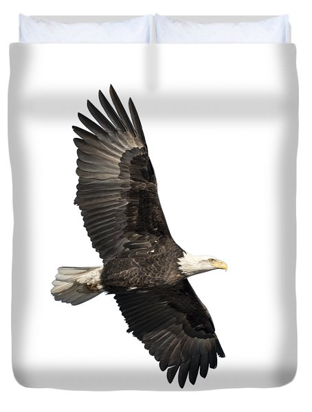 Isolated American Bald Eagle 2016-4 Duvet Cover
