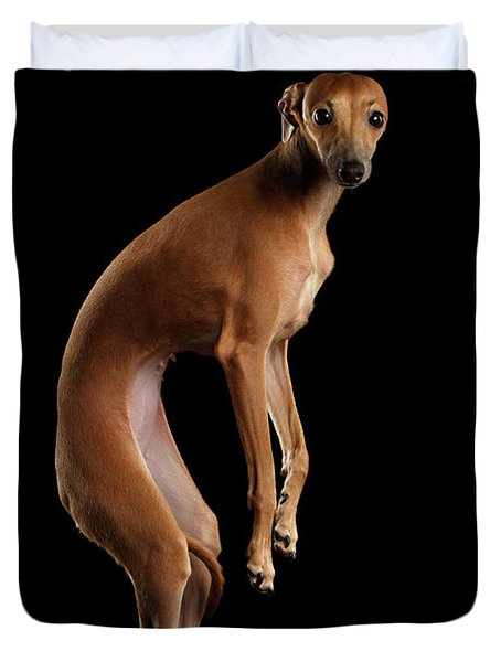 Italian Greyhound Dog Jumping, Hangs In Air, Looking Camera Isolated Duvet Cover