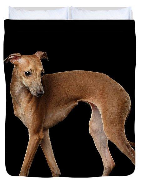 Italian Greyhound Dog Standing  Isolated Duvet Cover