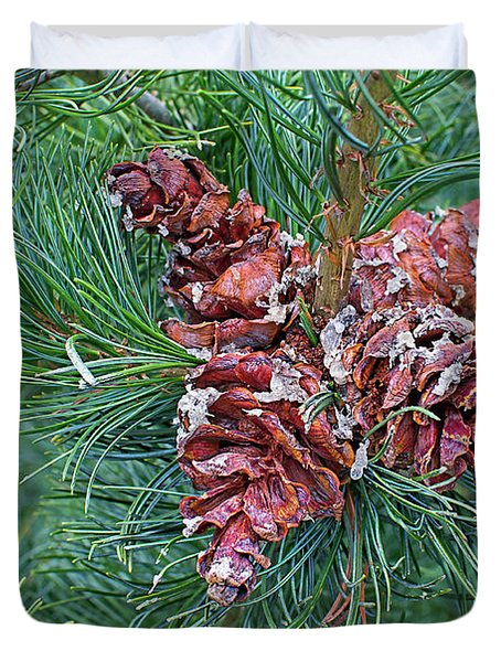 Duvet Cover featuring the photograph Japanese White Pine Pinecones 2 by Sharon Talson