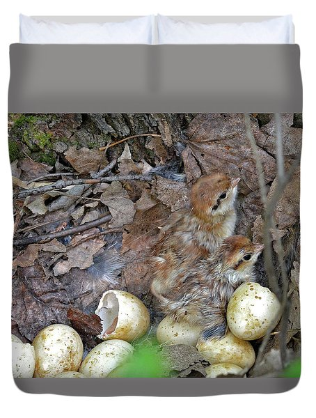 Just Hatched Ruffed Grouse Chicks Duvet Cover