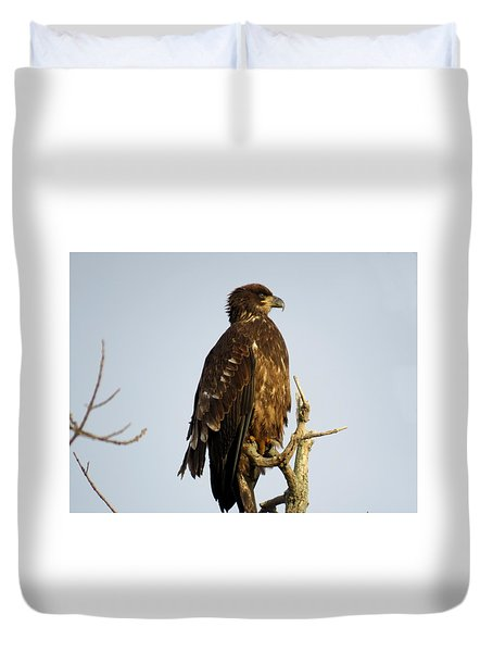 Juvenile Bald Eagle 1 Duvet Cover