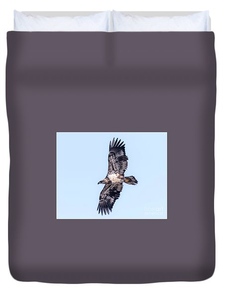Juvenile Bald Eagle 2017 Duvet Cover by Ricky L Jones