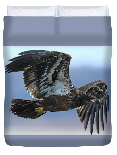 Juvenile Bald Eagle Duvet Cover by Coby Cooper