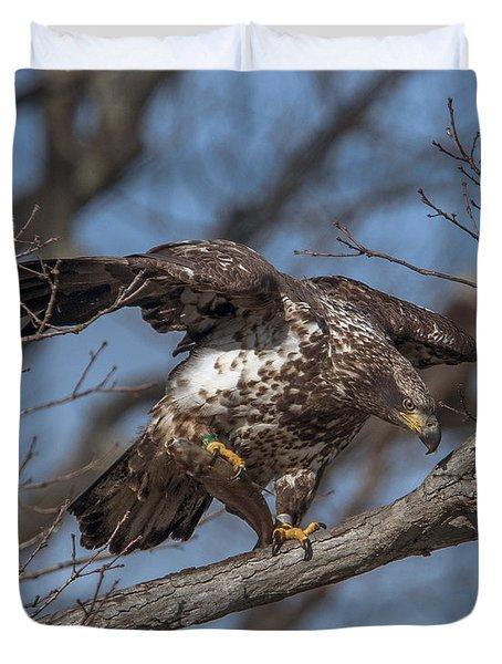 Juvenile Bald Eagle With A Fish Drb0218 Duvet Cover