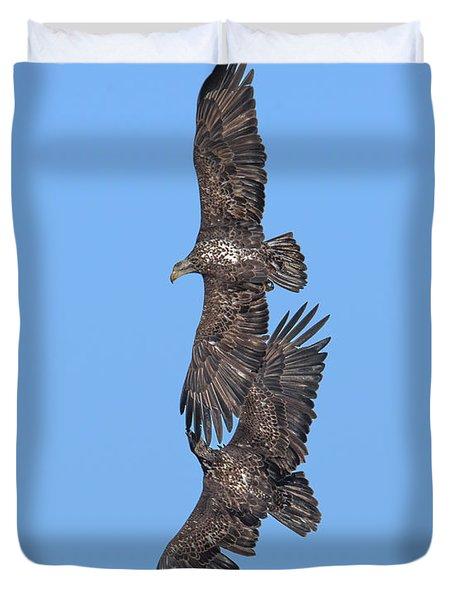 Juvenile Bald Eagles Drb0226 Duvet Cover