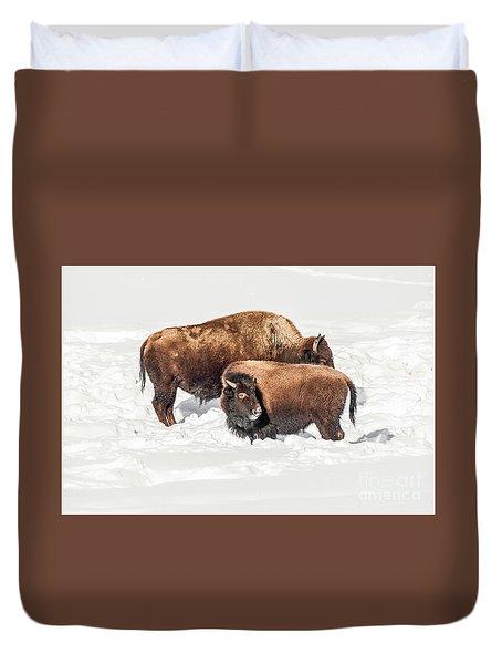 Juvenile Bison With Adult Bison Duvet Cover