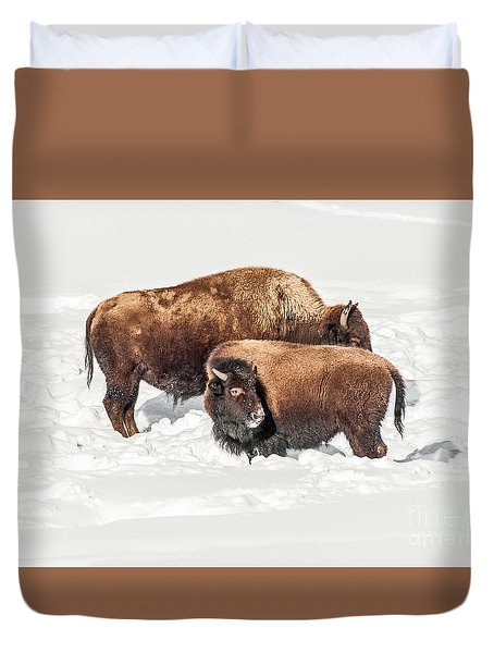 Juvenile Bison With Adult Bison Duvet Cover by Sue Smith