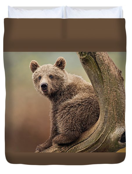 Juvenile Brown Bear - 365-5 Duvet Cover