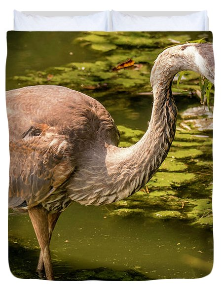 Juvenile Great Blue Heron Duvet Cover