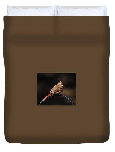Juvenile Male Cardinal Duvet Cover