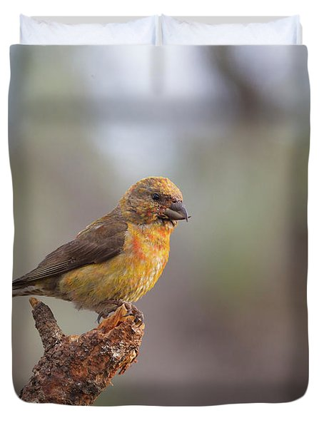 Juvenile Male Red Crossbill Duvet Cover