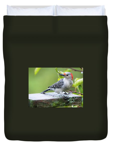 Duvet Cover featuring the photograph Juvenile Red-bellied Woodpecker In The Rain by Ricky L Jones