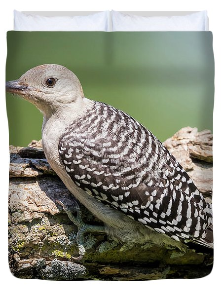 Juvenile Red-bellied Woodpecker Duvet Cover
